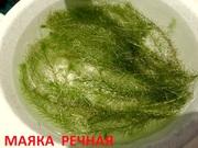 Маяка речная и др. растения --- НАБОРЫ растений для запуска акваса