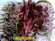 Могу собрать набор растений - для запуска или перезапуска аквариума