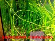 Валиснерия спиральная и др растения - НАБОРЫ растений для запуск-