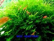 Мох крисмас и др. растения --- НАБОРЫ растений для запуска---------