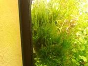 Мох стринг и др. растения ---- НАБОРЫ растений для запуска-----------