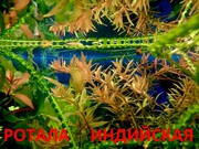 Ротала и др. растения --- НАБОРЫ растений для запуска---------------