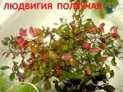 Людвигия ползучая и др. растения - НАБОРЫ растений для запуска- --