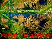 Ротала и др. растения -- НАБОРЫ растений для запуска акваса---