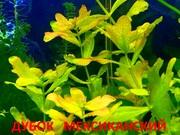 Дубок мексиканский и др. растения -- НАБОРЫ растений для запуска======
